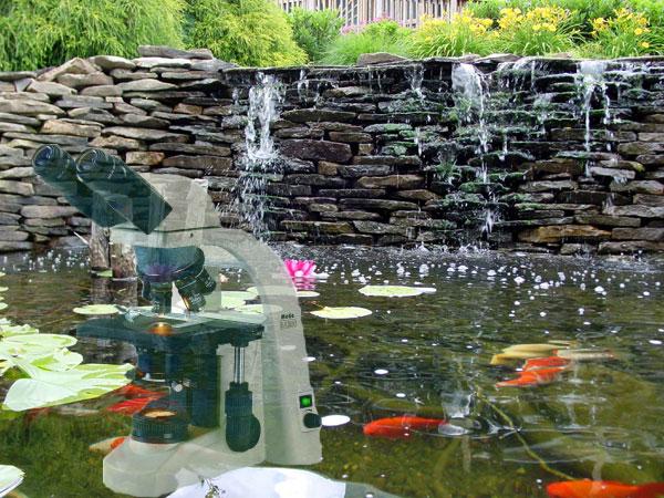 Ver tema el estanque de racsodl for Cascada estanque